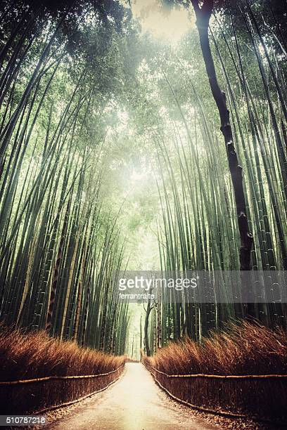 Kyoto Bambo Forest in Japan