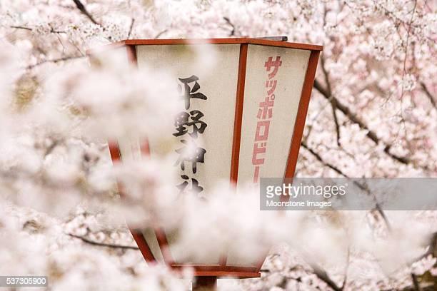 Kyoto City in Honshu, Japan