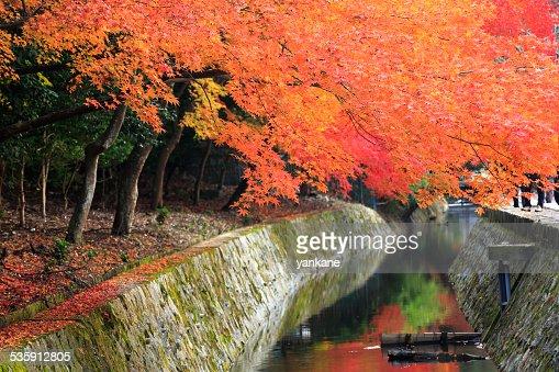 Kyoto, Japão, filósofo caminho no outono : Foto de stock