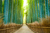 Kyoto, Japan bamboo forest.