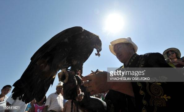 A Kyrgyz hunter feeds a golden eagle during a hunting festival in the Tamchi village near the IssykKule lake some 220 kms outside Bishkek on August 6...
