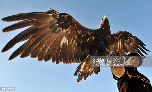A Kyrgyz man in traditional clothing holds a hunting bird on his arm 250km from Bishkek in Bokonbayevo on October 30 2009 during the annual Salburun...