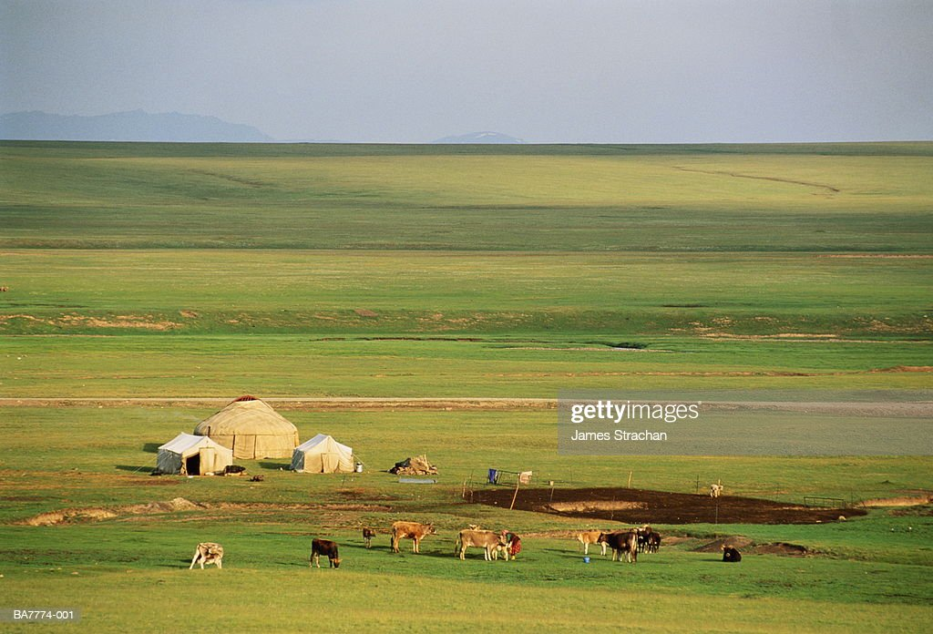 Kyrgyzstan, Lake Son-kul, yurt encampment and cattle on plain : Foto de stock