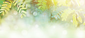 Spring time banner background of tropical green leaves at sunrise with white bokeh and copy space, soft style.