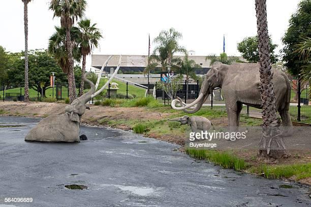 La Brea Tar Pits Los Angeles California