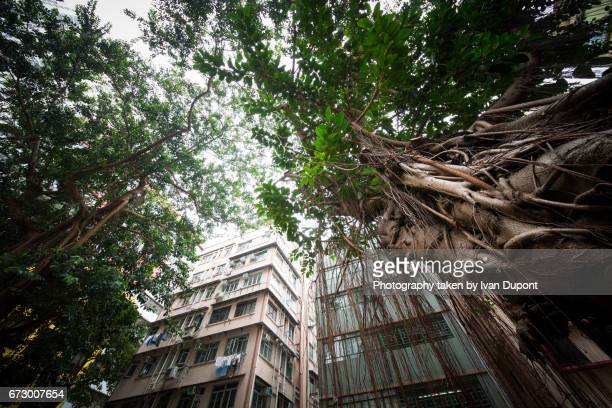 Chine stock photos and pictures getty images for La nature en ville