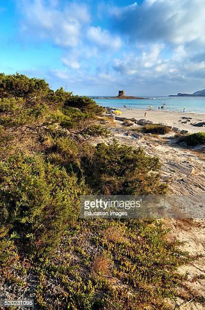 La Pelosa beach Stintino Sardinia Italy