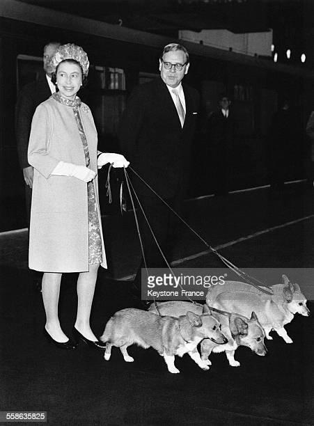 La Reine Elizabeth II avec ses corgis à la gare de King's Cross à son retour de Balmoral le 14 octobre 1969 à Londres RoyaumeUni