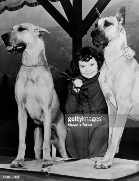 La toute petite star de cinéma Cora Sue Collins entourée de deux gros chiens à une exposition canine à Altadena Californie EtatsUnis le 24 décembre...