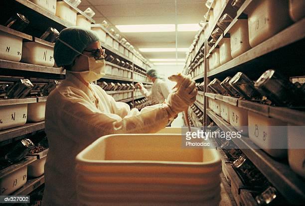 Lab tech holding rat from vat