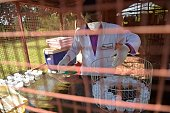 A lab technician handles sputum samples at APOPO's training facility in Morogoro on June 16 2016 APOPO trains African giant pouched rats to detect...