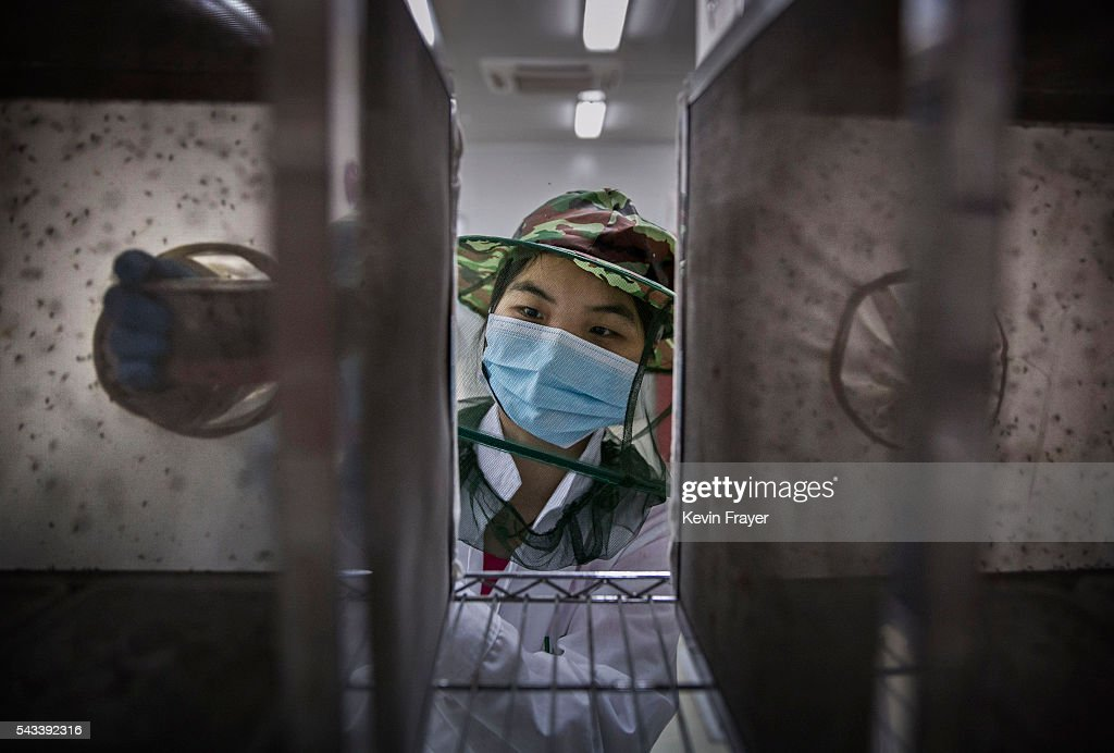 A lab technician wears a mask as she places mosquito pupa into a cage in a lab in the Mass Production Facility at the Sun YatSen UniversityMichigan...
