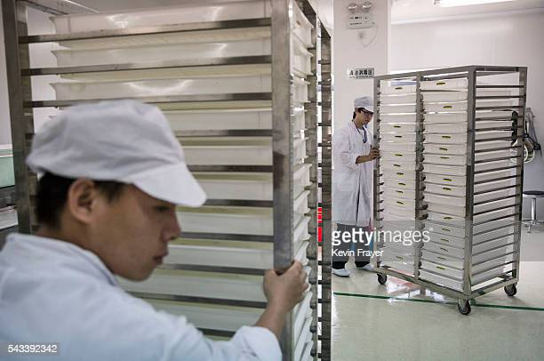 Lab technicians push carts carrying mosquito larvae in a lab in the Mass Production Facility at the Sun YatSen UniversityMichigan University Joint...