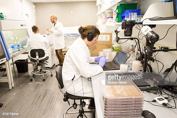 Lab work is done at the offices of Indigo Agriculture Inc a company that engineers crops in Boston on July 20 2016