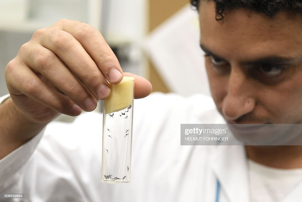 A lab worker holds a vial containing mosqitos of the kind 'Aedes aegypti', that can carry zika virus, on February 10, 2016 at the IAEA Laboratories in Seibersdorf near Traiskirchen south of Vienna, Austria. The International Atomic Energy Agency (IAEA) aims with its programme in Human Health to 'enhance the capabilities in its member states to address needs related to the prevention, diagnosis and treatment of diseases through the application of nuclear techniques'. / AFP / APA / HELMUT FOHRINGER / Austria OUT