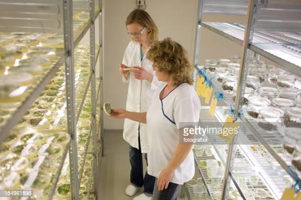 assistants de laboratoire dans une serre vérifier dans la culture in vitro