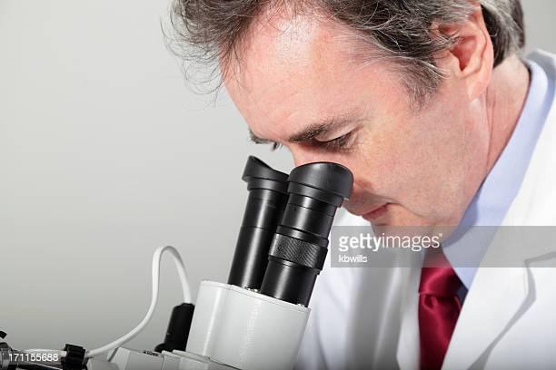 laboratory technician examines through microscope, stereoscope