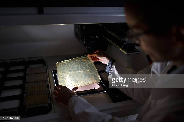 A laboratory technician holds a petri plate of yeast colonies under a light at the Royal DSM NV laboratory in Delft Netherlands on Monday Jan 20 2014...