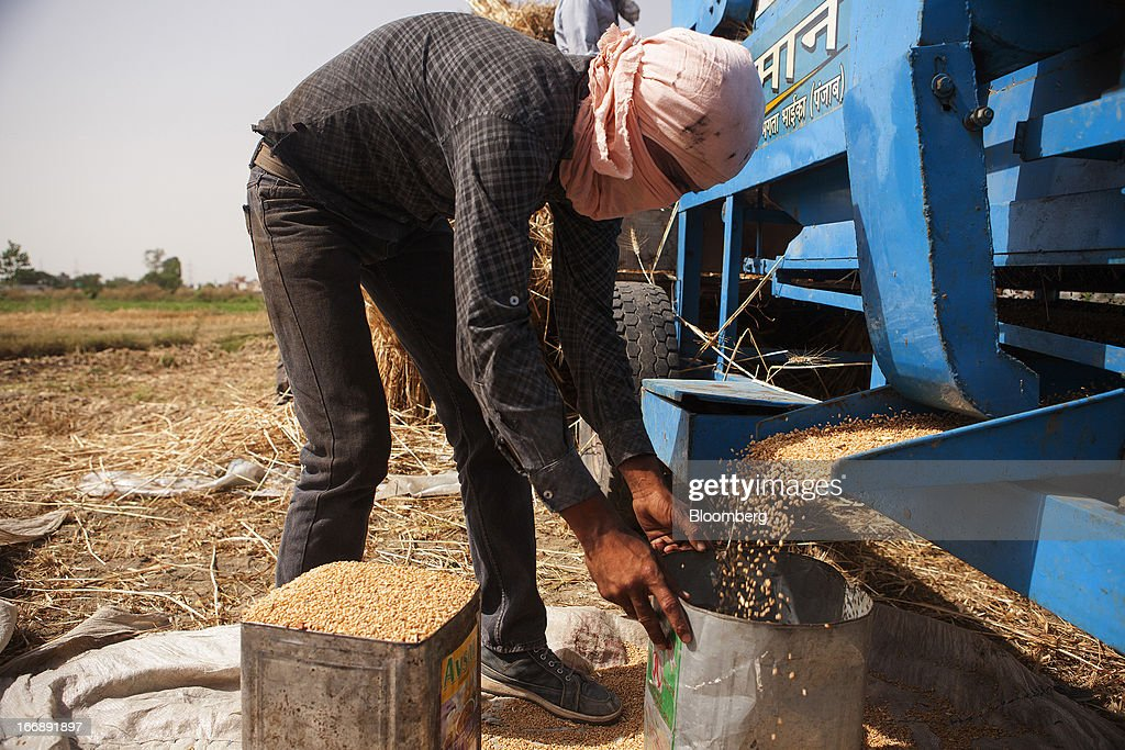 A laborer fills cans with harvested wheat in the district of Jalandhar in Punjab, India, on Tuesday, April 16, 2013. Wheat harvest in India, the second-biggest grower, may reach a record for a sixth straight year after farmers increased use of high-yielding seeds and winter rains boosted crop prospects, a state-run researcher said. Photographer: Prashanth Vishwanathan/Bloomberg via Getty Images