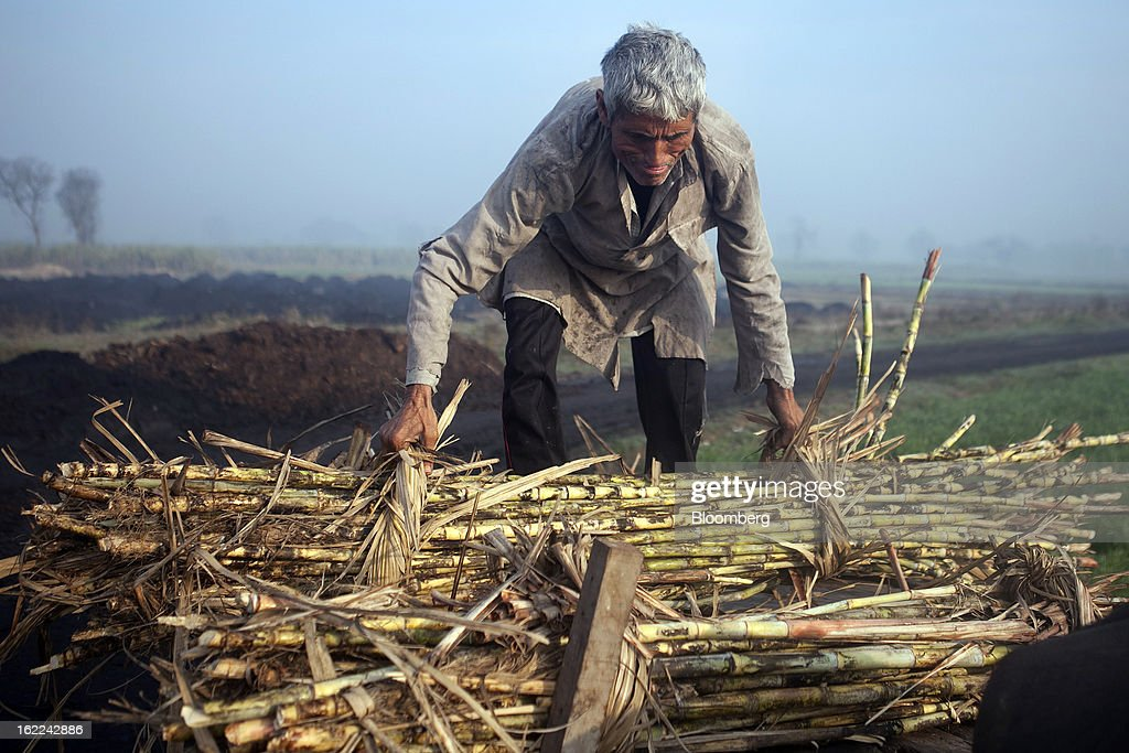 A laborer moves a bundle of harvested sugarcane in a field in the outskirts of Modinagar, Uttar Pradesh, India, on Tuesday, Feb. 19, 2013. Mills in Uttar Pradesh state, set to be India's largest sugar producer in 2012-2013, may continue cane crushing until April 30, Uttar Pradesh Sugar Mills Association President C.B. Patodia said in a phone interview. Photographer: Prashanth Vishwanathan/Bloomberg via Getty Images