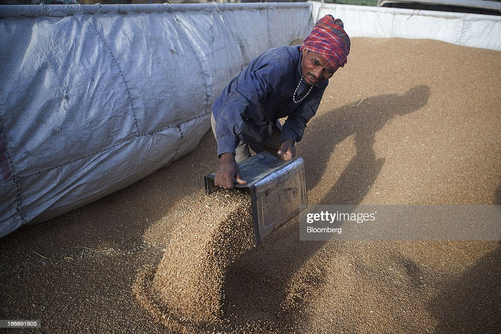 A laborer shovels harvested wheat at a grain market in the district of Jalandhar in Punjab, India, on Tuesday, April 16, 2013. Wheat harvest in India, the second-biggest grower, may reach a record for a sixth straight year after farmers increased use of high-yielding seeds and winter rains boosted crop prospects, a state-run researcher said. Photographer: Prashanth Vishwanathan/Bloomberg via Getty Images