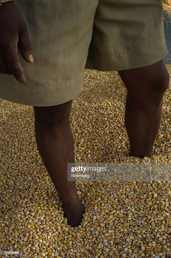 A laborer stands in corn grains laid out to dry at a grain market in the district of Burhanpur, Madhya Pradesh, India, on Friday, Oct. 19, 2012. India is Asia's biggest grower of corn after China. Photographer: Sanjit Das/Bloomberg via Getty Images