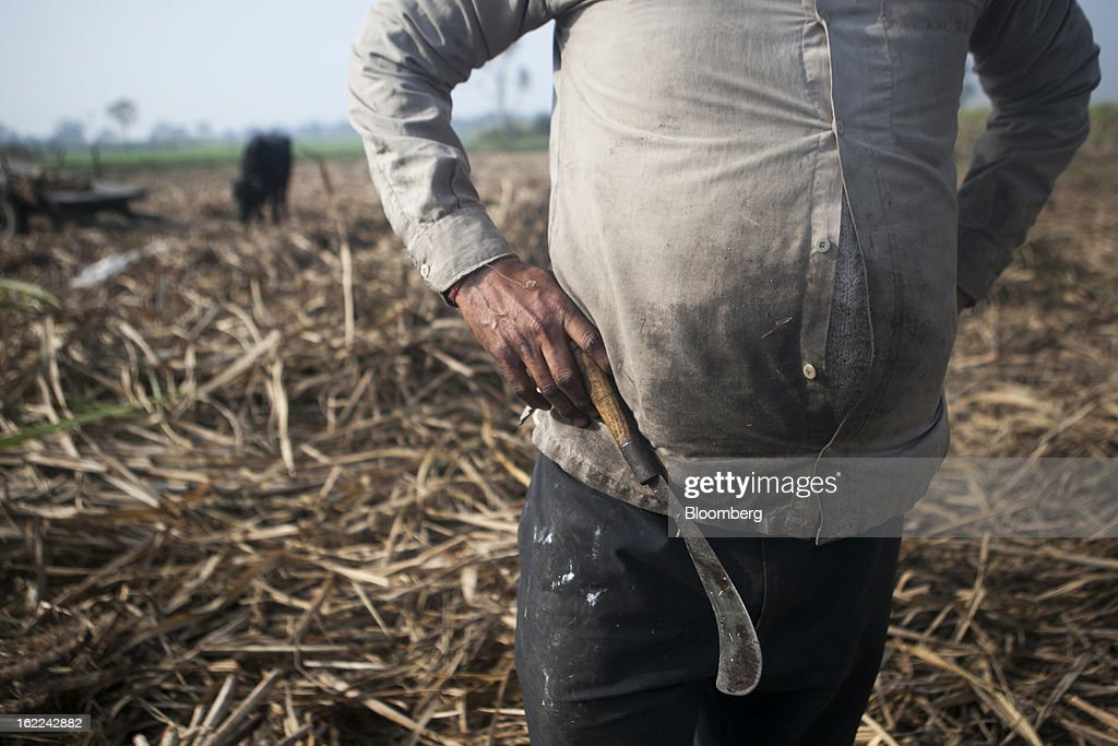 A laborer stands with a sickle in a sugarcane field in the outskirts of Modinagar, Uttar Pradesh, India, on Tuesday, Feb. 19, 2013. Mills in Uttar Pradesh state, set to be India's largest sugar producer in 2012-2013, may continue cane crushing until April 30, Uttar Pradesh Sugar Mills Association President C.B. Patodia said in a phone interview. Photographer: Prashanth Vishwanathan/Bloomberg via Getty Images