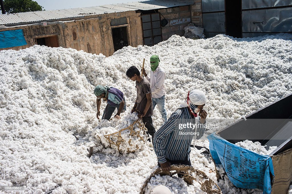 Laborers work at a cotton processing plant in Mathania, in the district of Jodhpur in Rajasthan, India, on Monday, Oct. 29, 2012. Cotton shipments from India, the world's second-largest grower, are set to tumble, forcing the government to make record purchases to stem a slide in prices. Photographer: Sanjit Das/Bloomberg via Getty Images