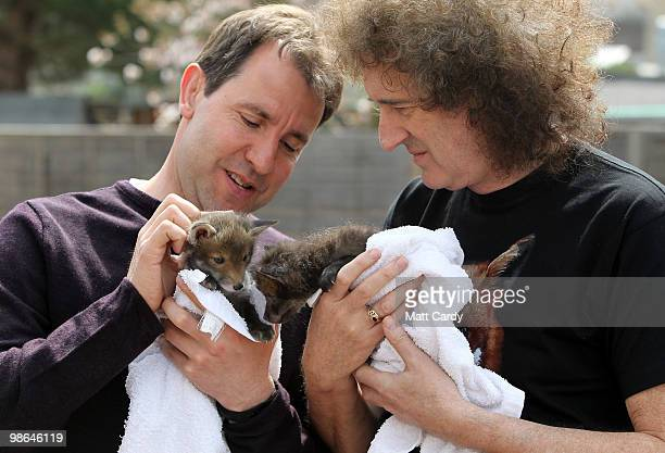 Labour candidate Dan Norris and Brian May founding member of the rock band Queen holds a baby fox cub rescued by the Secret World Wildlife Rescue...