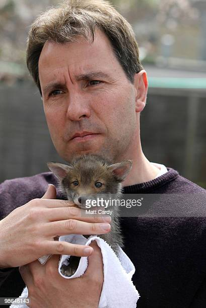 Labour candidate Dan Norris holds a baby fox cub rescued by the Secret World Wildlife Rescue centre in Somerset on April 24 2010 in Midsomer Norton...