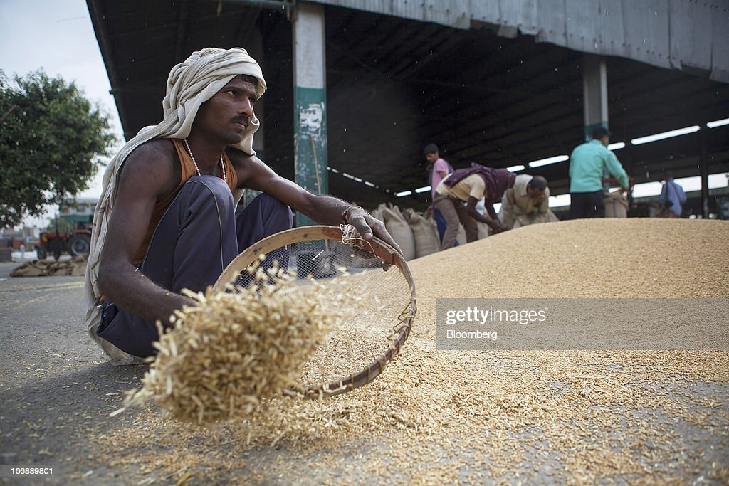 A labourer cleans harvested wheat at a grain market in the district of Jalandhar in Punjab, India, on Tuesday, April 16, 2013. Wheat harvest in India, the second-biggest grower, may reach a record for a sixth straight year after farmers increased use of high-yielding seeds and winter rains boosted crop prospects, a state-run researcher said. Photographer: Prashanth Vishwanathan/Bloomberg via Getty Images