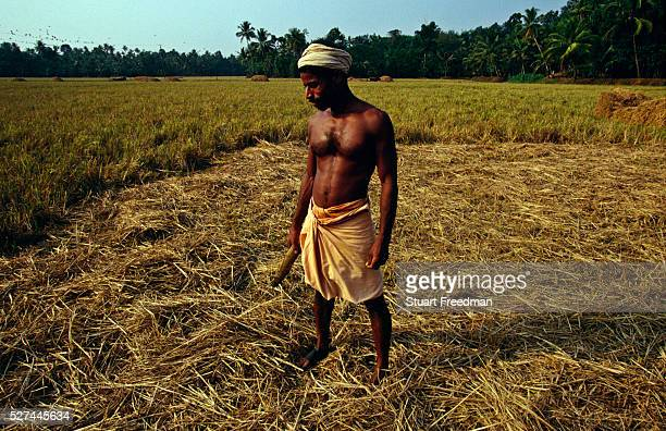 A labourer like Velutha a central character in Arundhati Roy's novel the God of Small Things in the fields around Ayamenam Kerala | Location Aymenam...