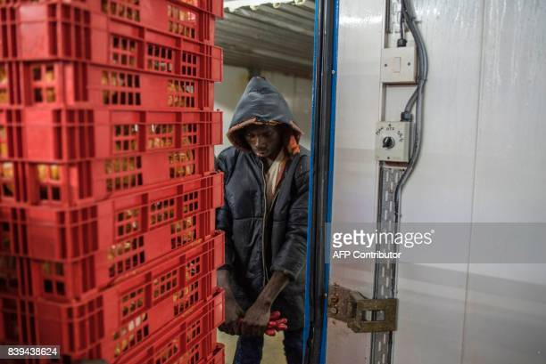 A labourer moves packaged chickens into a refrigeration room for storage at the Valentine Chicken Abattoir on July 11 2017 Farming in Nigeria is not...