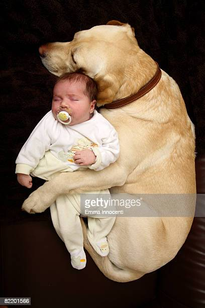 Labrador hugging New Born Bab