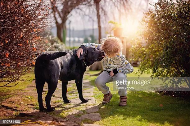 labrador retriever dogDOG