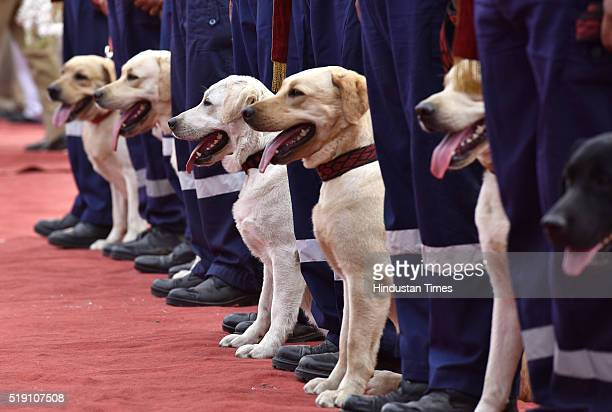 Labrador Retriever dogs marching with their handlers during the induction of 30 Labrador Retriever dogs in the dog squad of Delhi Police on April 4...