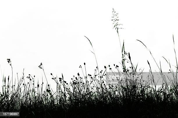 Lace of grass