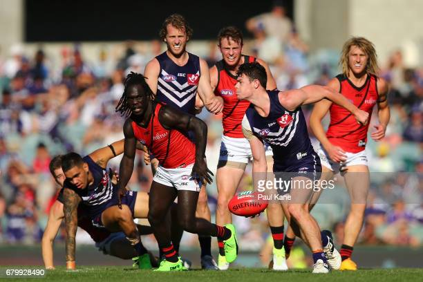 Lachie Neale of the Dockers handballs during the round seven AFL match between the Fremantle Dockers and the Essendon Bombers at Domain Stadium on...