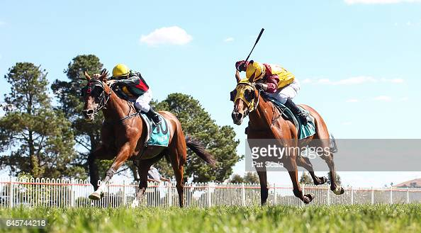 Lachie's a Star ridden by Dean Holland wins the Ararat Farm Supplies Grand Handicap Win You're In BM64 at Ararat Racecourse on February 27 2017 in...