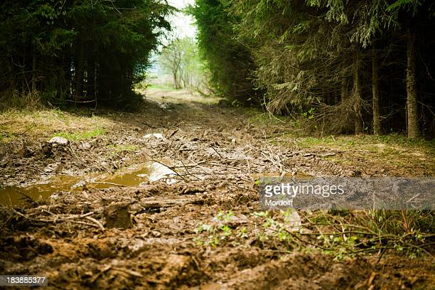 Lack of roads in spring forest