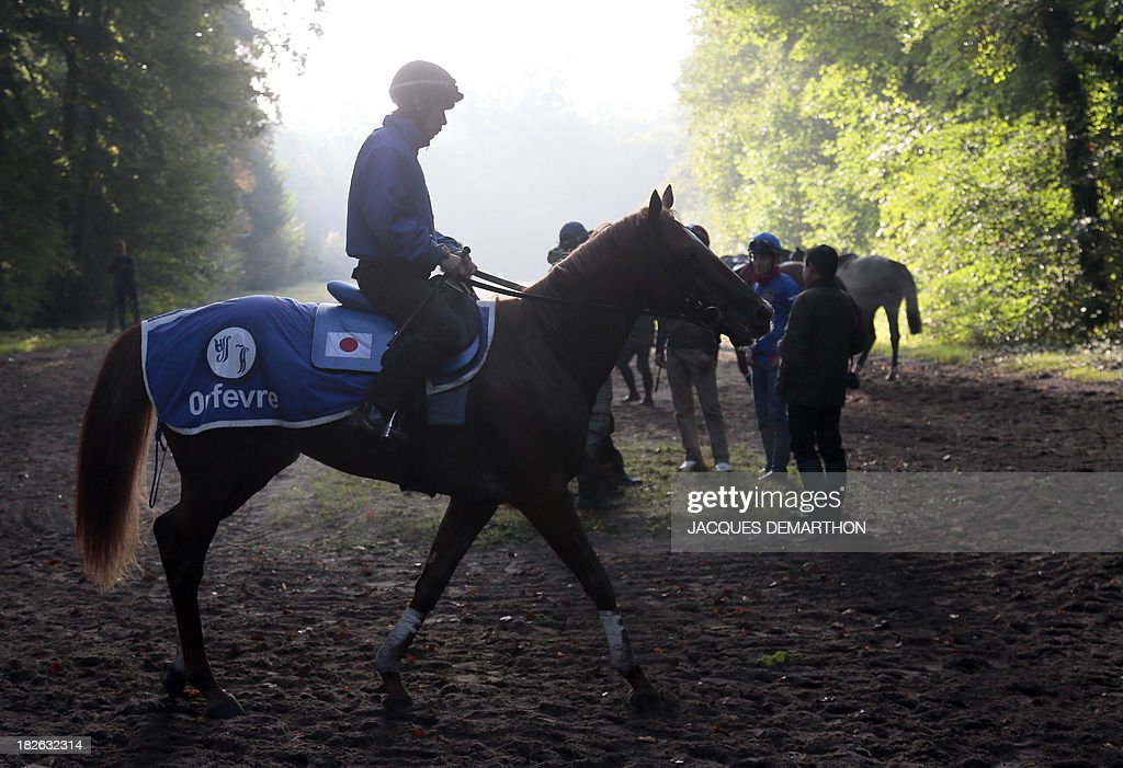 A lad rides Orfevre after a training session in Chantilly, north of Paris, on October 2, 2013 ahead of the Qatar Prix de l'Arc de Triomphe on October 6, 2013.