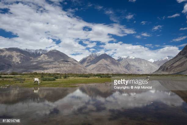 Ladakh region landscape scenic view of lake with mountain and horse in Leh Ladakh, India