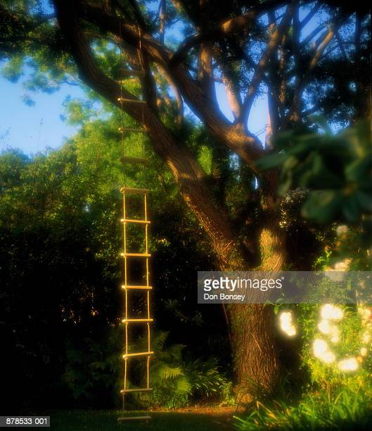 Ladder hanging from tree (soft focus)