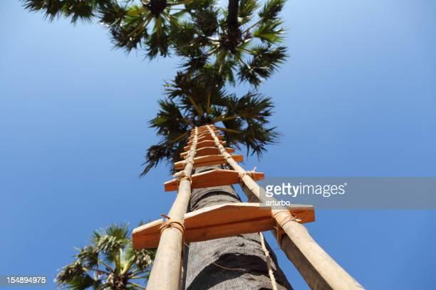 梯子を、ブルースカイ