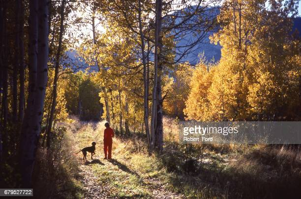Lady and dog walking through golden aspen trees in autumn in the Sierra Nevada Mountains near Bishop California