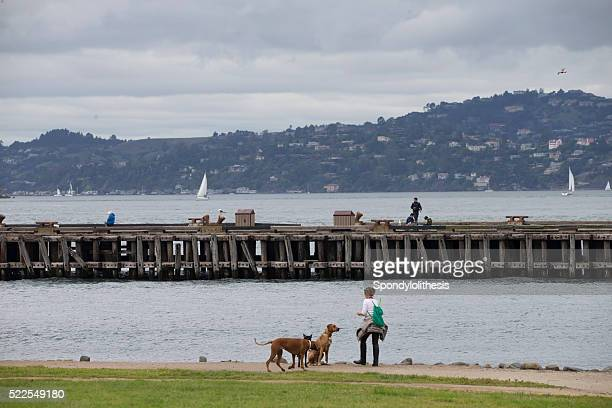 Lady and her three dogs at San Francisco Bay Trail