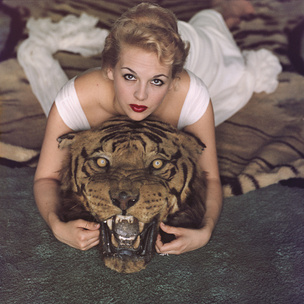 Lady Daphne Cameron on a tiger skin rug in the trophy room at socialite Laddie Sanford's home in Palm Beach Florida 1959