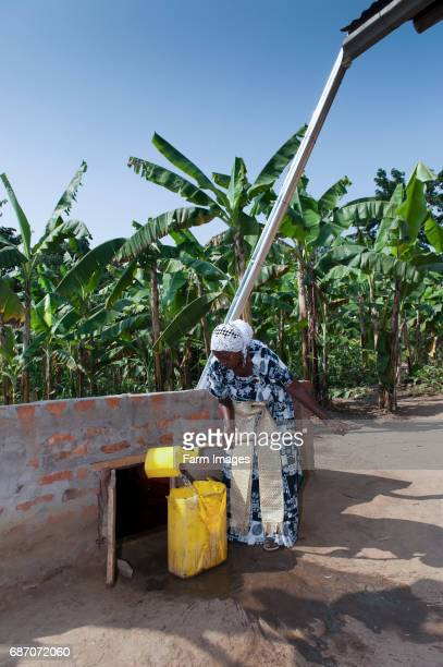 Lady getting water from an uderground store supplied by water from house roof Uganda