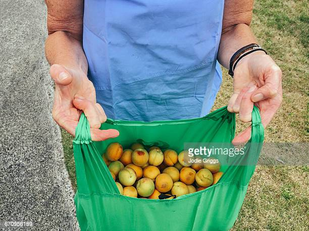 Lady holding bag full of hand picked apricots