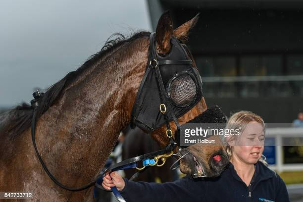 Lady Skills after winning XXXX Gold FM BM64 Handicap at Racingcom Park Synthetic Racecourse on September 05 2017 in Pakenham Australia